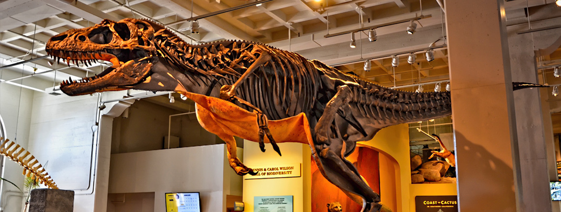San Diego Natural History Museum - 5 Museums You Simply Must Visit When in Balboa Park, San Diego